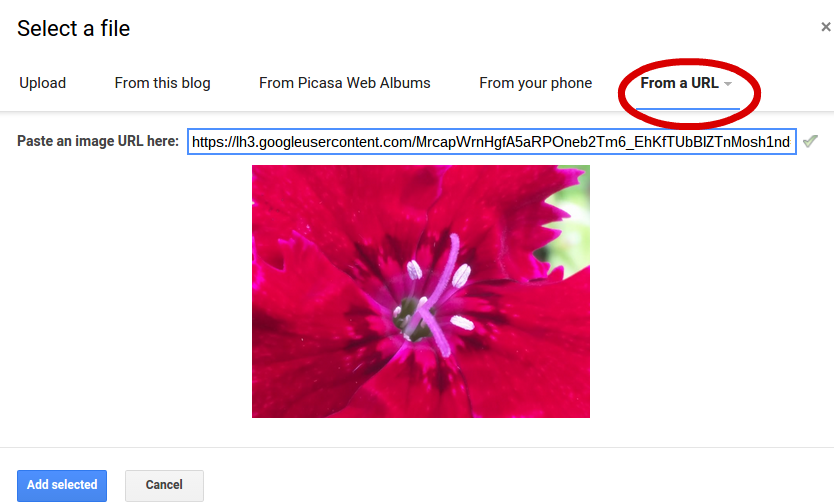 how to delete photos from google images