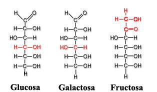 Moléculas de glucosa, galactosa y fructosa