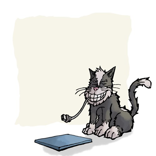 funny cat computer