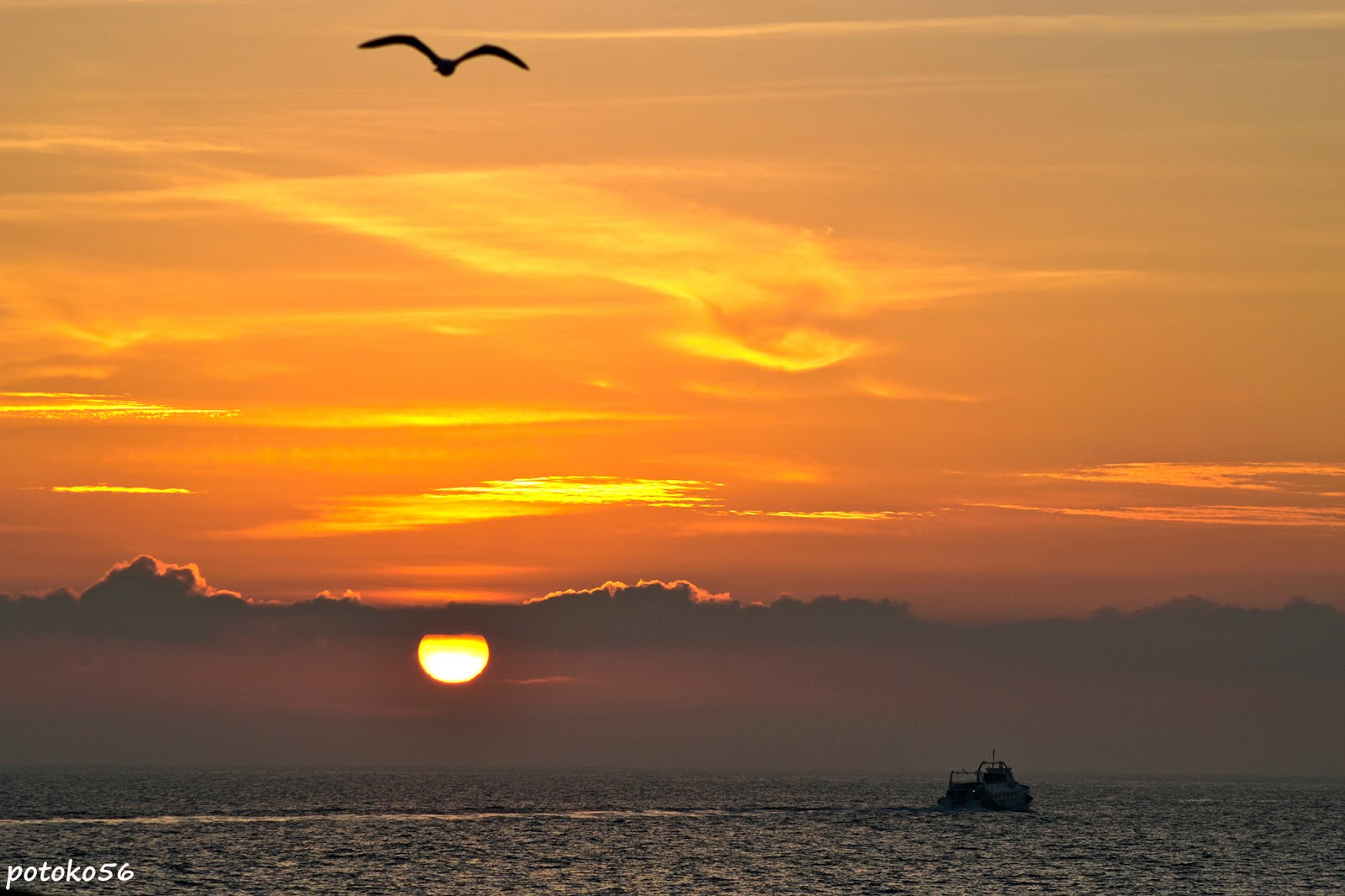 Catamarán - Gaviota - Amanecer