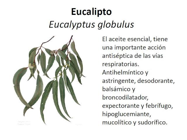 Academia citogim algunas plantas medicinales y sus for Planta decorativa con propiedades medicinales
