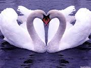 ¿Que es el amor para ti? que es el amor