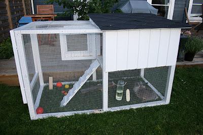 kandang kelinci hias outdoor