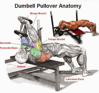Dumbell Pullover Training