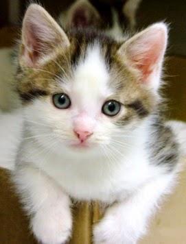 Foto de un gato pequeño