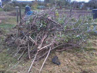 Bush debris after cutting back to find a fruit tree.