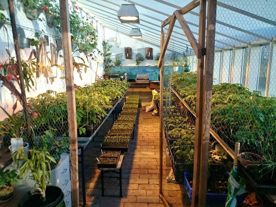 Växthus För Balkong : Boäng hela plantresan nästan