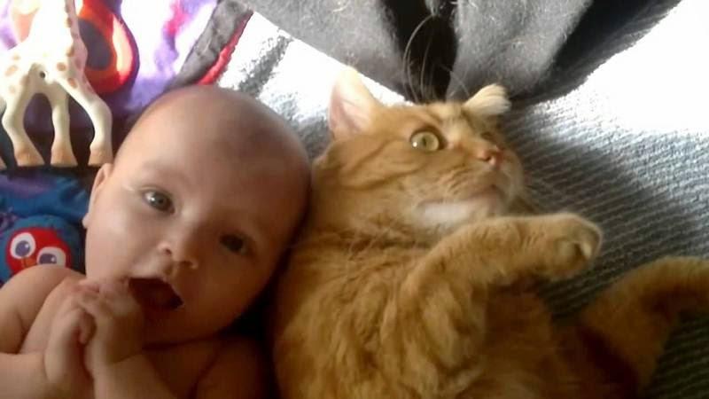 Gratis foto bayi lucu bermain dengan kucing binatang kesayangannya