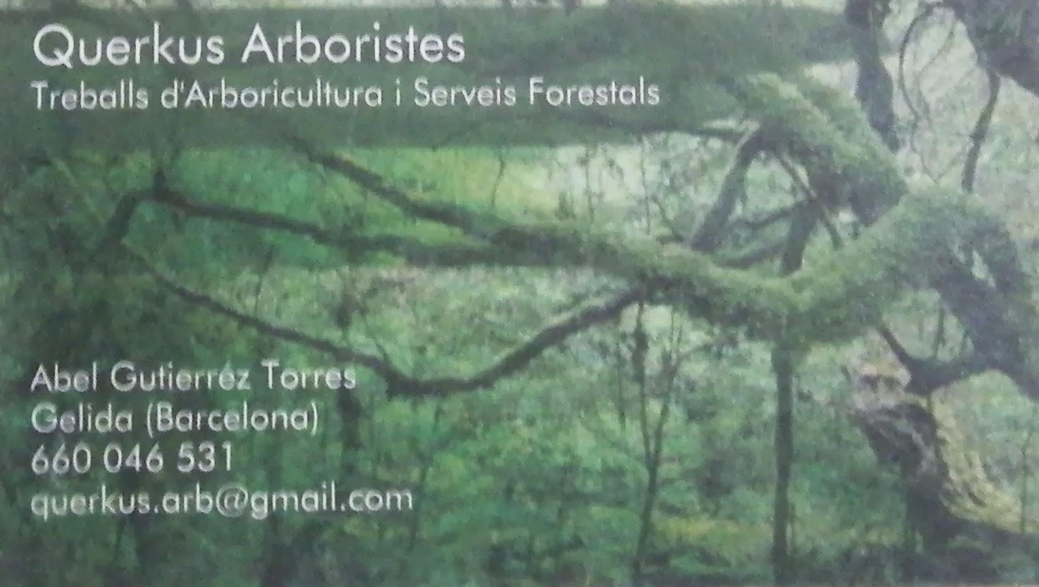 ¿Necesitas un arborista?