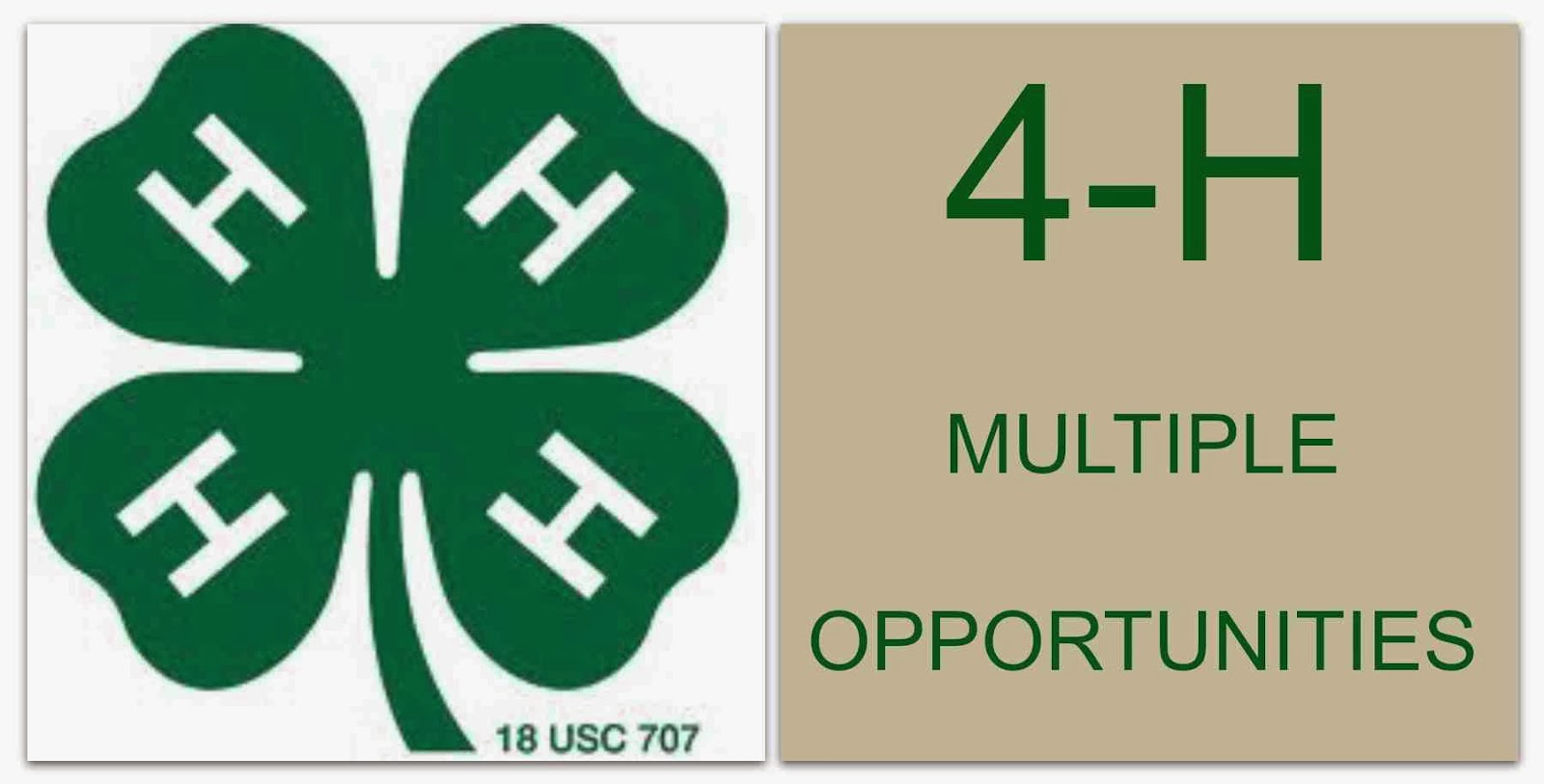 4H opportunities