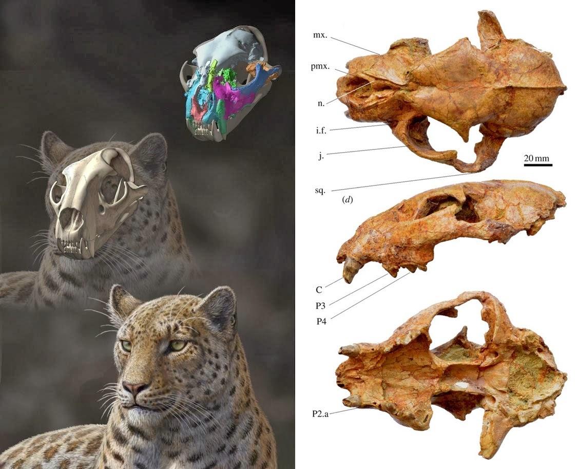 Fossil Record Cat Australia