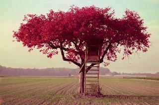Aqui vou ser feliz, red tree