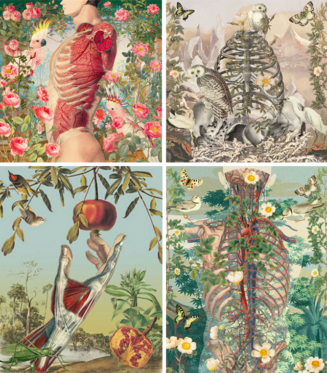 anatomical collages by juan gatti, with birds, flowers and nature