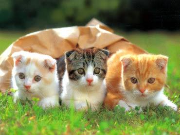 #13 Cute Animal Wallpaper