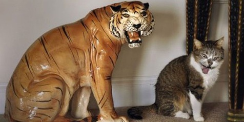 Lucu Banget Lihat Aksi Konyol Si Kucing yang Ngamuk ke Boneka Harimau