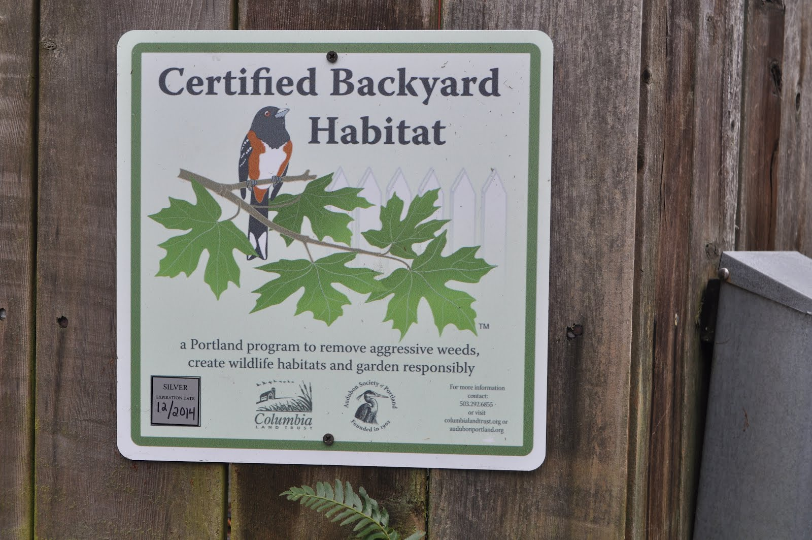 Certified Backyard Habitat stream of consciousness: backyard bird habitat certified!