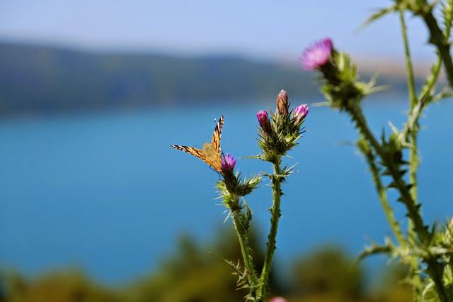 yoros kalesi-kelebek-ucuncu kopru-anadolu kavagi-istanbul kacamaklari