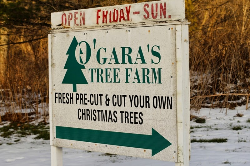 cut your own Christmas trees!