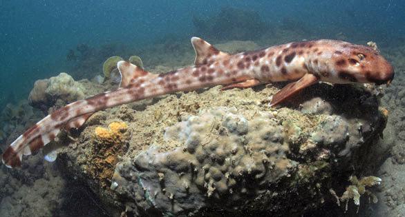 nuove/rare specie scoperte nell'arcipelago indonesiano