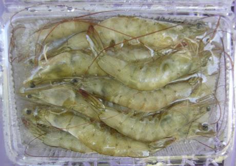 養生活凍蝦