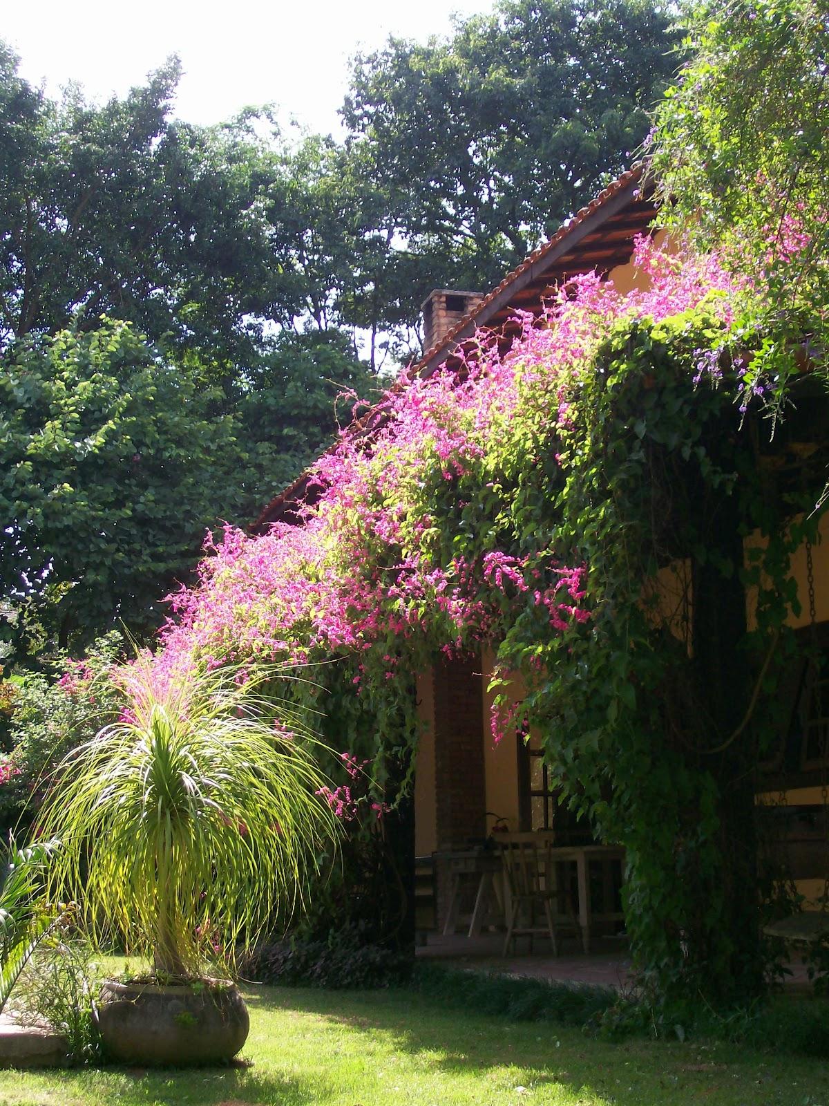 Trepadeiras  Um Jardim e suas conseqüências por Geni Albuquerque