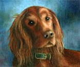 "<a href=""http://seadogsbeach.blogspot.com/search/label/Animals"">Animals Of Us</a>"