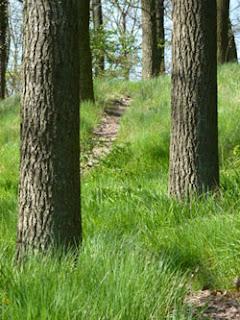 Wandern Oberes Mittelrheintal, Wanderrouten, Rhein, Wanderwege, Mittelrhein