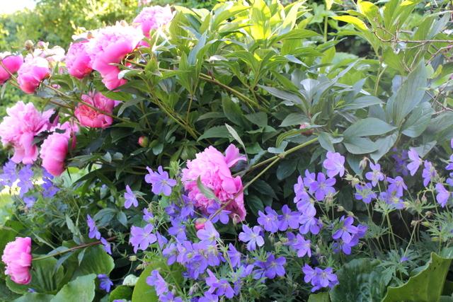 ævlebævle: et lille bed med lang blomstrings tid