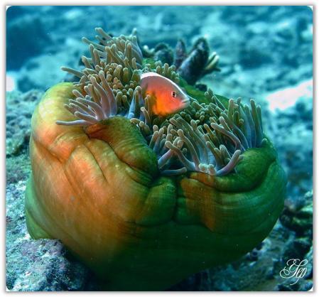 Nieluch Yuritzha D'thaouruz: Pemandangan Alam Laut