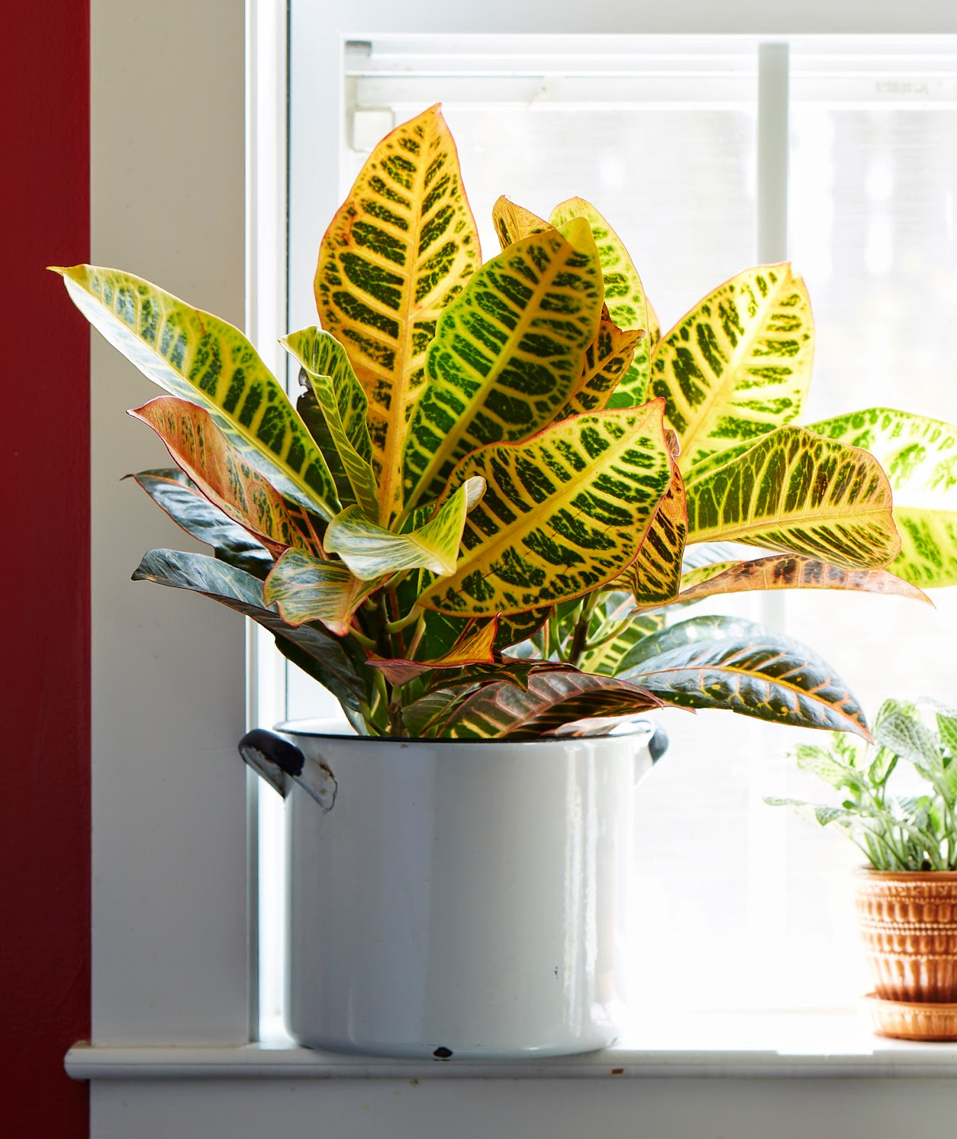 Emerging research also indicates that certain varieties of indoor  houseplants work best to help cleanse interior spaces of indoor pollutants  and improve ...