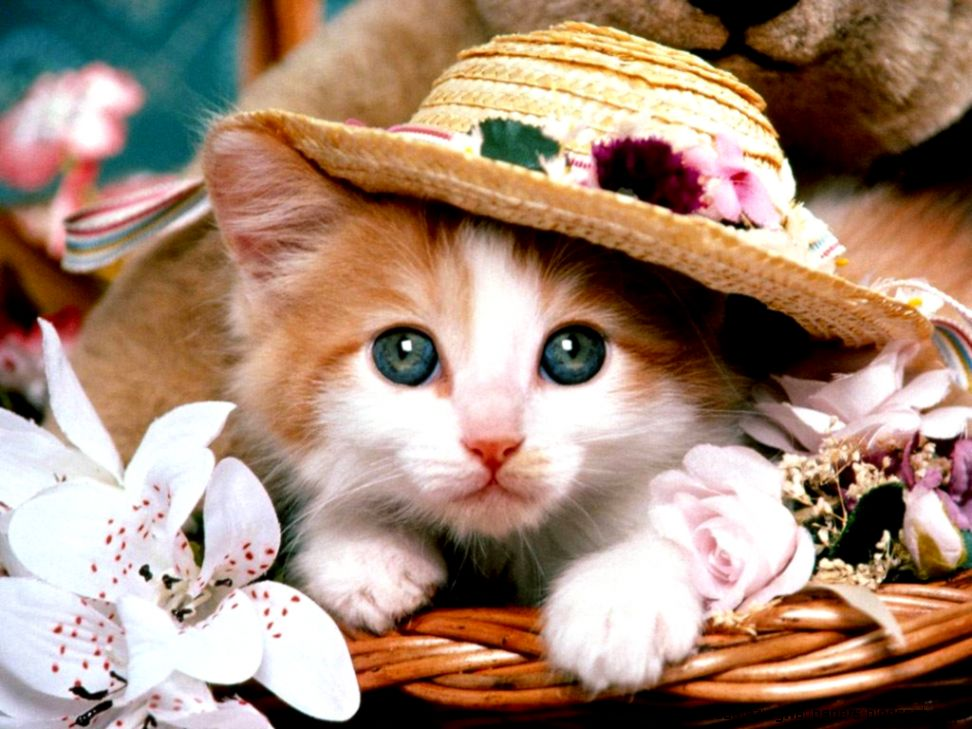Cute Cat Wallpaper   Cats Wallpaper