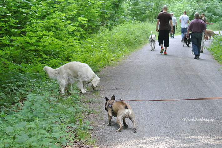 Hunde Übungs-Gruppenspaziergang