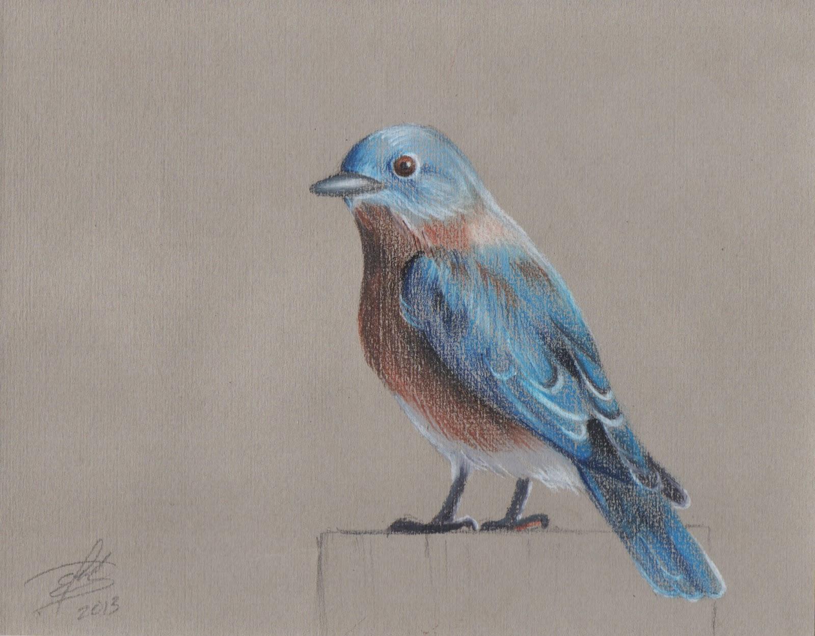 Mexican birds drawings tania fuentes for Azulejo azul