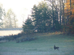 Beautiful Doe at Dawn