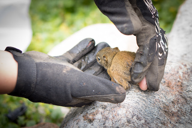 Rescue of baby squirrel from drowning, baby squirrel, animal rescue