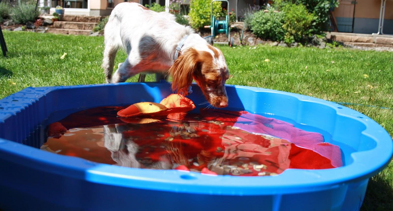 Hundeblog fressen kuscheln buddeln garten poolparty for Garten pool party