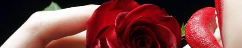 rosa roja labios rojos