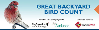 Great Backyard Bird Count logo