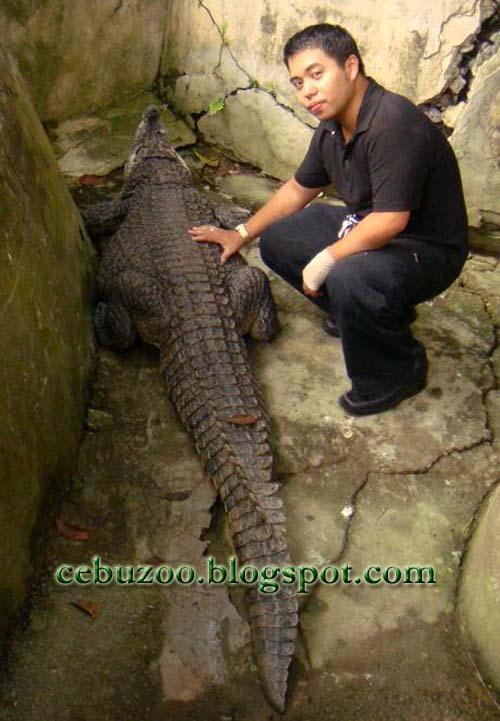 Cebu Zoo Saltwater Crocodile