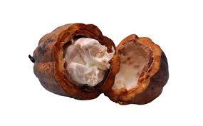 budidaya kakao, budidaya tanaman kakao, budidaya coklat