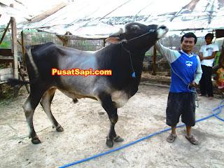 ternak yang paling cepat panen