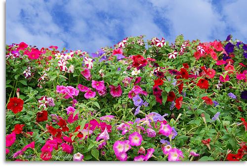 rosas no jardim de deus:Criando no Caos: EXISTE UM JARDIM NO CÉU.