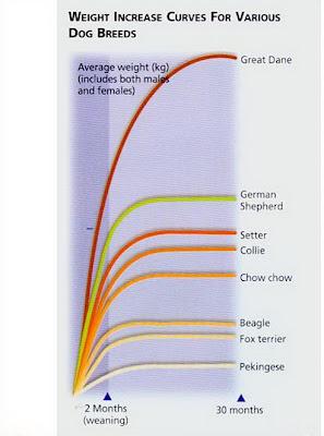 Đường cong tăng trọng trên các giống chó khác nhau.
