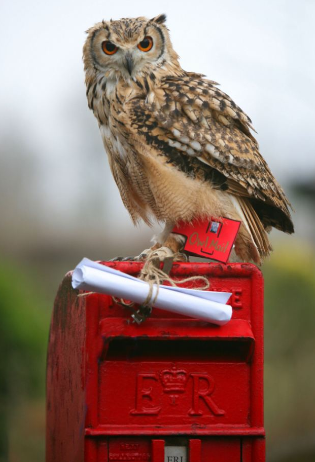 owls+deliver+mail.png