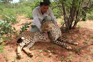 pet cheetah