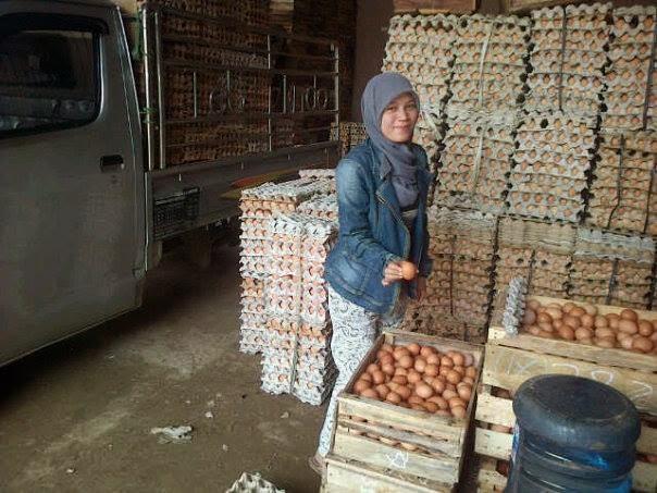 Harga Telur Ayam Turun