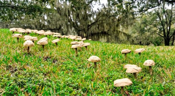 Spore Project 2014 - Orlando - Doug Rhodehamel