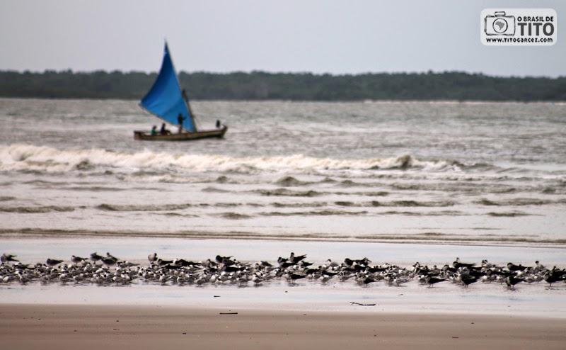 Aves e barquinho à vela na praia do Farol (ou da Princesinha), na ilha de Maiandeua (Algodoal), no Pará
