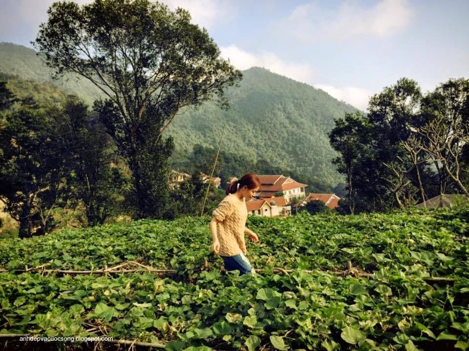 Ca sĩ Hoàng Thùy Linh nô đùa bên vườn rau 1