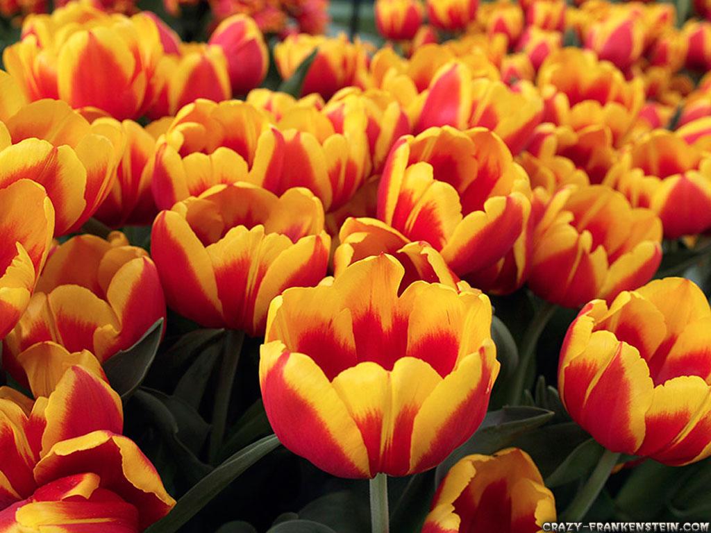 http://3.bp.blogspot.com/-ZQcrkzZNOuw/T8zEcgBUfCI/AAAAAAAAEeo/KftEzd16ZhE/s1600/Flower-wallpaper-11.jpg